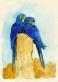 Arara azul grande